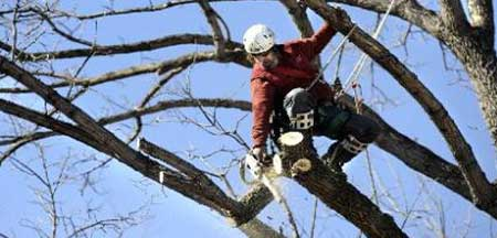 About American Tree Service